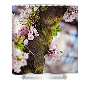 Contrast. Pink Spring In Amsterdam Shower Curtain