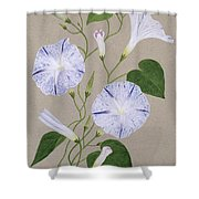 Convolvulus Cneorum Shower Curtain by Frances Buckland