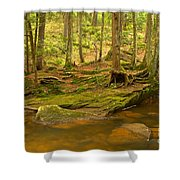 Cook Forest Rocks And Roots Shower Curtain