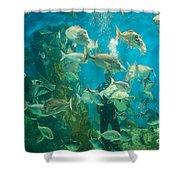 Cool Aquarium Shower Curtain by Ray Warren