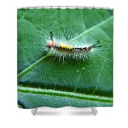 Cool Caterpillar Shower Curtain