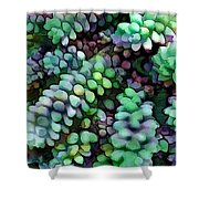Cool Hued Burro's Tails In The Hot Desert Shower Curtain