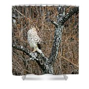 Coopers Hawk 0741 Shower Curtain