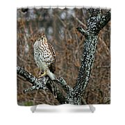 Coopers Hawk 0745 Shower Curtain