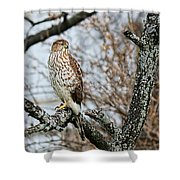 Coopers Hawk 0748 Shower Curtain