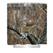 Coopers Hawk 0750 Shower Curtain