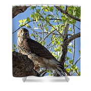 Cooper's Hawk In A Cottonwood Shower Curtain