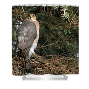 Coopers Hawk In Predator Mode Shower Curtain
