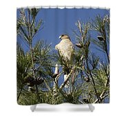 Coopers Hawk In Tree Shower Curtain