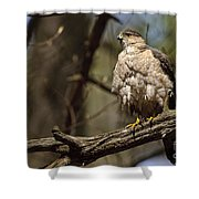 Coopers Hawk Pictures 124 Shower Curtain