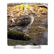 Coopers Hawk Pictures 61 Shower Curtain