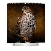 Coopers Hawk Portrait 1 Shower Curtain