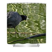 Coot Calling Shower Curtain