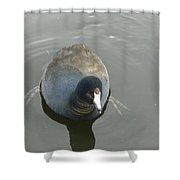 Coot Portrait Shower Curtain