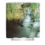 Coots Shower Curtain