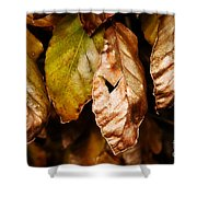 Copper Beech Leaves Shower Curtain