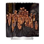 Copper Candles--junkyard Macro No. 3 Shower Curtain