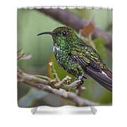 Copper-headed Emerald Beauty Shower Curtain