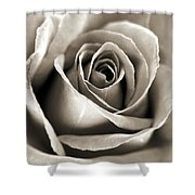 Copper Rose Shower Curtain
