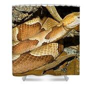 Copperhead Snake Shower Curtain