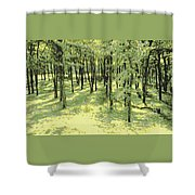 Copse Of Trees Sunlight Shower Curtain