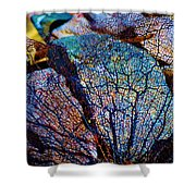 Coral Beached Shower Curtain