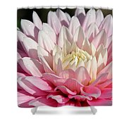 Coral Dahlia Shower Curtain