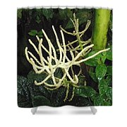 White Palm Flower In Costa Rica Shower Curtain
