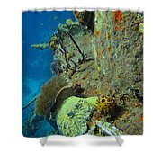 Coral Growth On A Ship Wreck Shower Curtain
