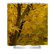 Coral Maple Fall Color Shower Curtain