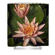 Coral Pink Water Lilies Shower Curtain