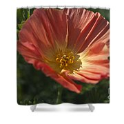 Coral Poppy 1 Shower Curtain