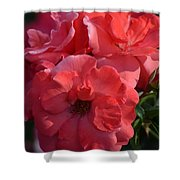 Coral Roses 2013 Shower Curtain