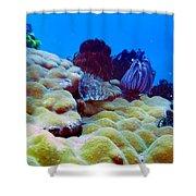 Corals Underwater Shower Curtain