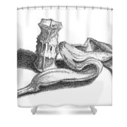 Core And Skin Sketch Shower Curtain