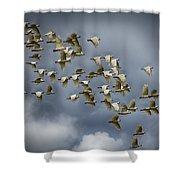 Corella Flock Shower Curtain