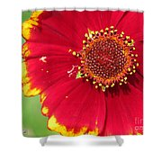 Coreopsis Or Golden Tickseed Shower Curtain