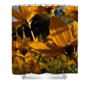 Coreopsis Summer 2010 Shower Curtain