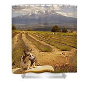 Corgi And Mt Shasta Shower Curtain