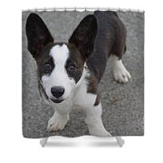 Corgi Puppy Shower Curtain