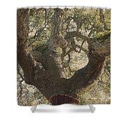 Cork Oak Tree Shower Curtain