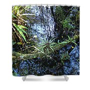 Corkscrew Swamp 16 Shower Curtain