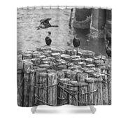 Cormorant Landing Black And White Shower Curtain
