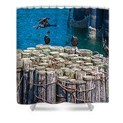Cormorant Landing Shower Curtain