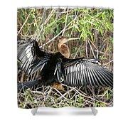 Cormorant Wingspan Shower Curtain