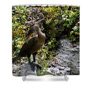 Cormorants-one Shower Curtain