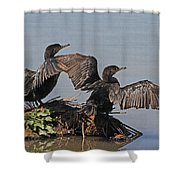 Cormorants Sunbathing Shower Curtain