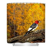 Corn Fed Woodpecker Shower Curtain