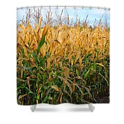 Corn Harvest Shower Curtain by Terri Gostola