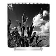 Corn Maze 01 Bw Shower Curtain